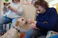 Pet Therapy 25