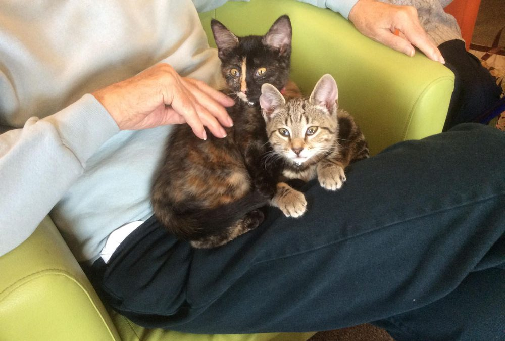 Kittens make pet therapy session at Safe Haven just purr-fect for clients
